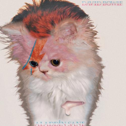 bowie-kitten