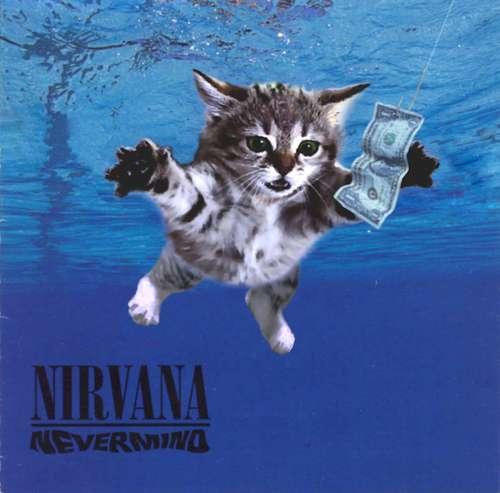 the-kitten-covers-tumblr